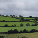 Fields lined by hedgerows on the Ring of Kerry.