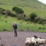 Brendan Ferris and his sheep herding demonstration.
