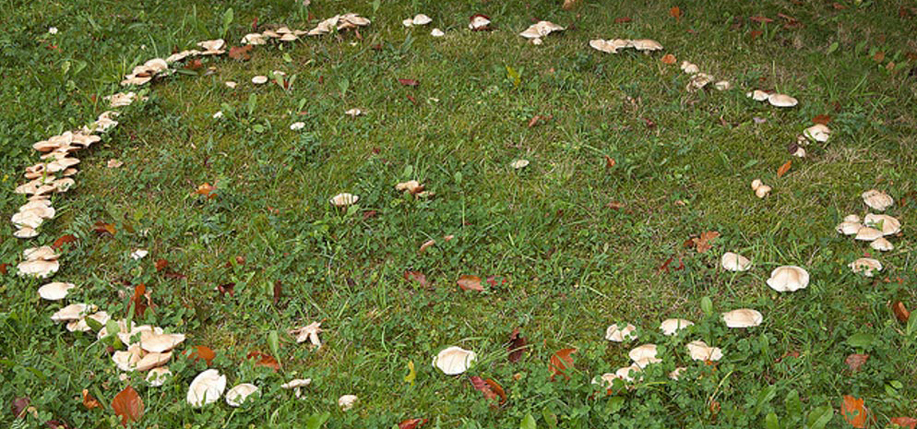 A fairy ring, also known as fairy  circle. Since ancient times, naturally occurring rings of mushrooms were taken as a sign of  otherworldly presences.