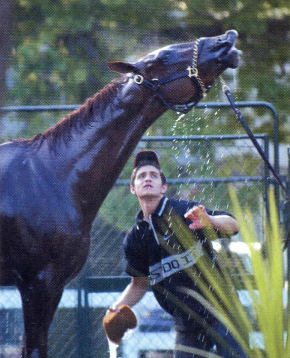Funny Side takes a shower at Belmont the day before the race.