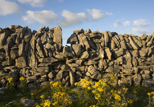 Farmer's stone wall in late-evening evening sunlight, County Clare.
