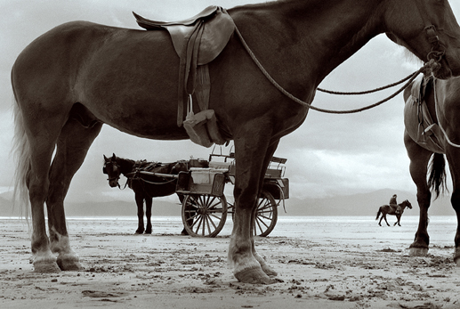 Horses and jaunting cart at Inch beach, Co. Kerry, 1970.