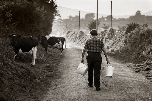 Milking time, Co. Waterford, 1990.