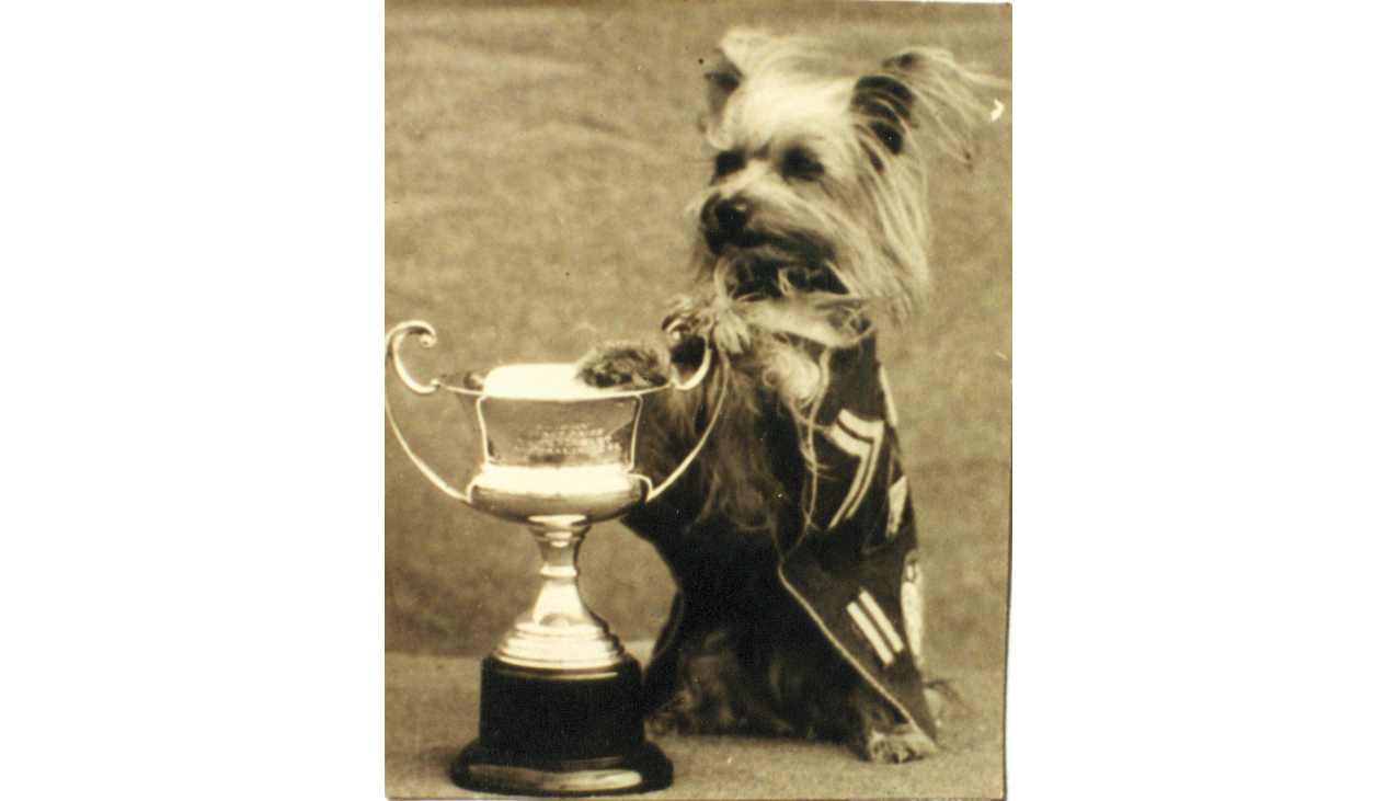 "Smoky stands with her Champ Mascot trophy, now permanently displayed in The American Kennel Club Museum of the Dog in West St. Louis, Missouri. Here she wears a special ""jacket"" sewn from a card table cover by Red Cross volunteers in Australia and adorned with 5th Air Force insignia."