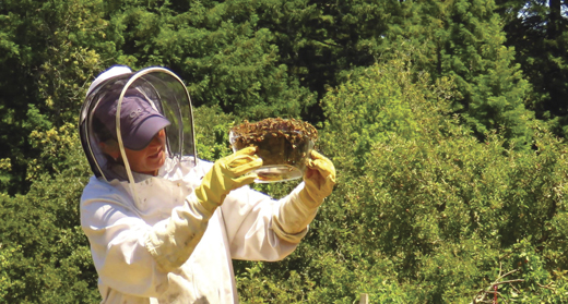 Beekeeper Honora Harty extracting honey.
