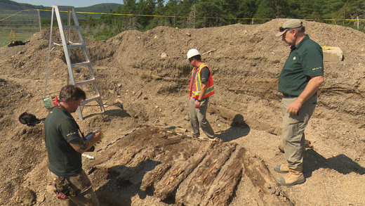 Archaeologists unearth some of the abandoned remains.
